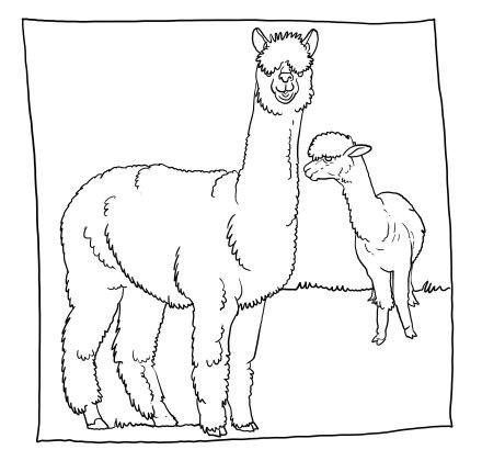 alpaccas.jpg