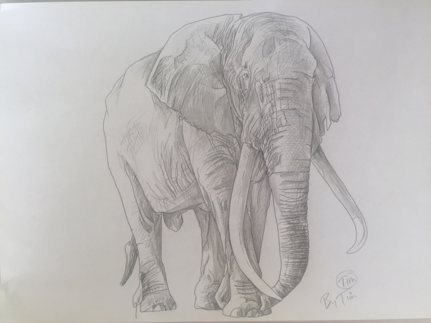 elephant TIM by TIM.jpg